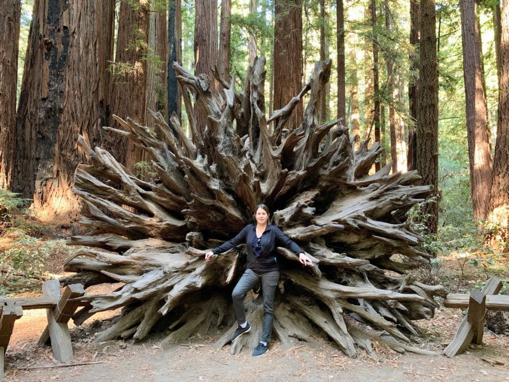 Woman in front of large fallen tree trunk in Armstrong Woods