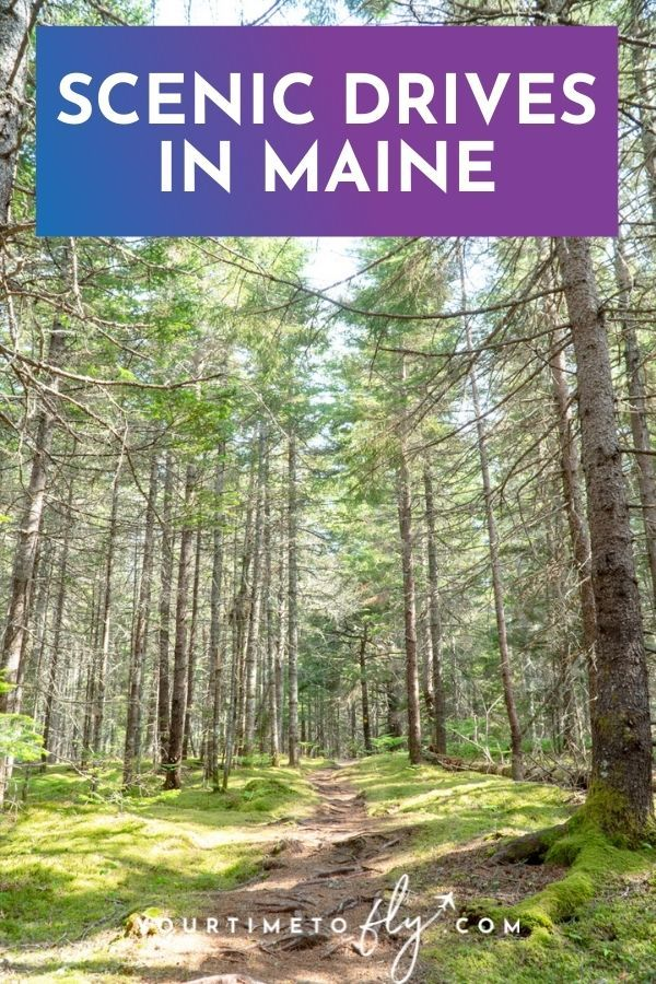 Scenic drives in Maine with a path through a forest