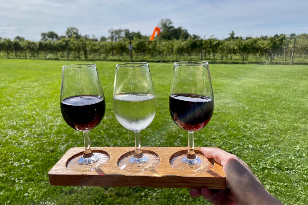 Wine flight with three wines held up in front of a vineyard at Knapp Winery