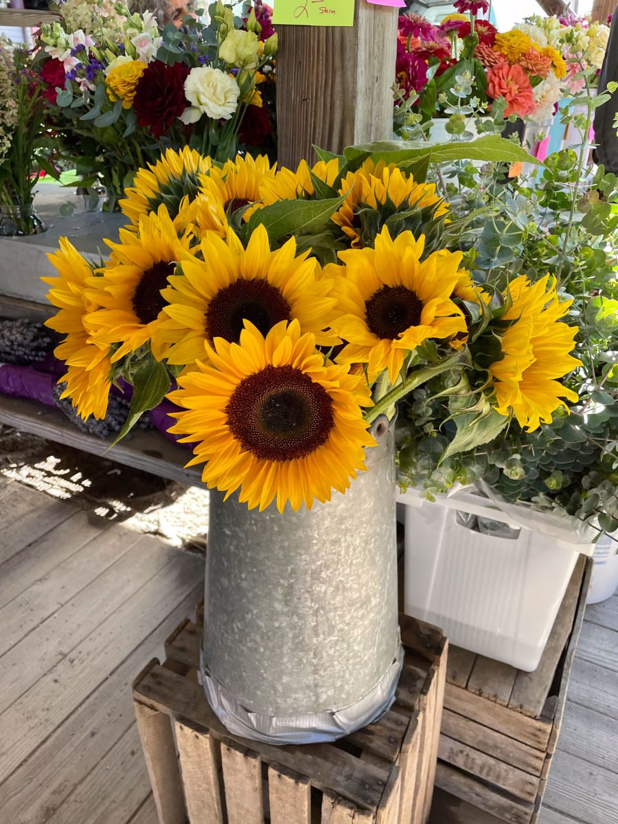 sunflowers in silver metal pitcher